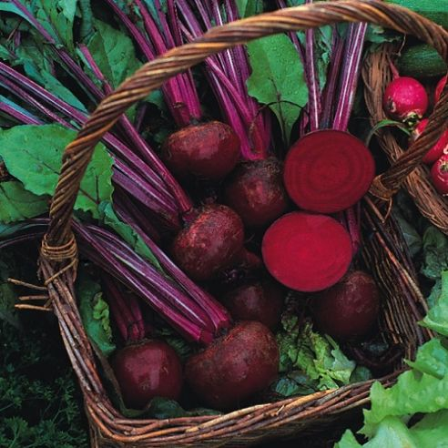 Beetroot Boltardy - Appx 1400 seeds